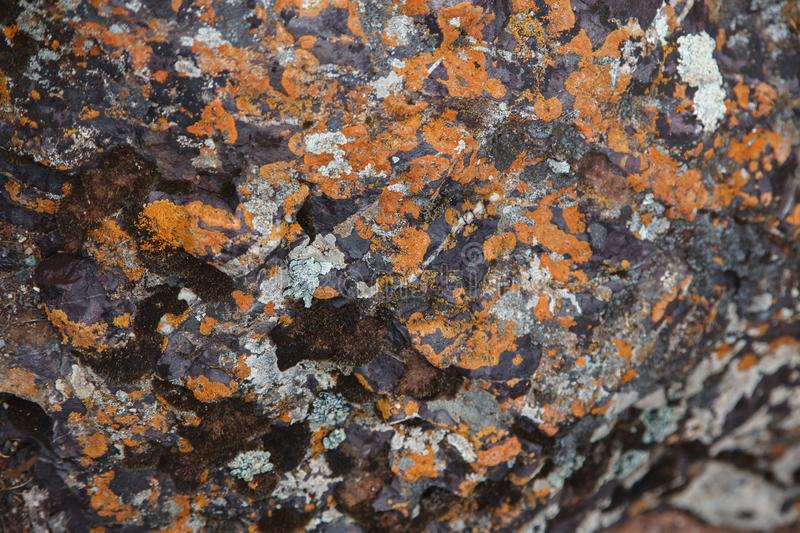 Plane of multicolored boulder. Beautiful rock surface close up. Colorful textured stone. Amazing detailed background of highlands royalty free stock photography