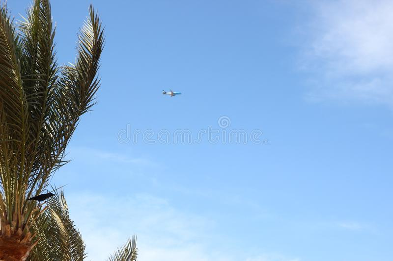 The plane soaring in the sky. Raven prepared to fly. The plane soaring in the sky.Raven on a palm tree prepared for flight. Photos on the desktop stock image