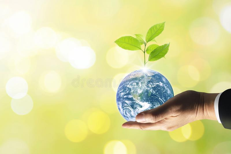 Planet earth with beautiful freshness growth tree. Planet earth with beautiful freshness growth tree and drop of water holed by hand of business man on outdoor royalty free stock image