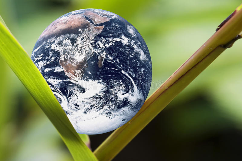 Download Planet Earth on Green Leaf stock photo. Image of global - 13324346