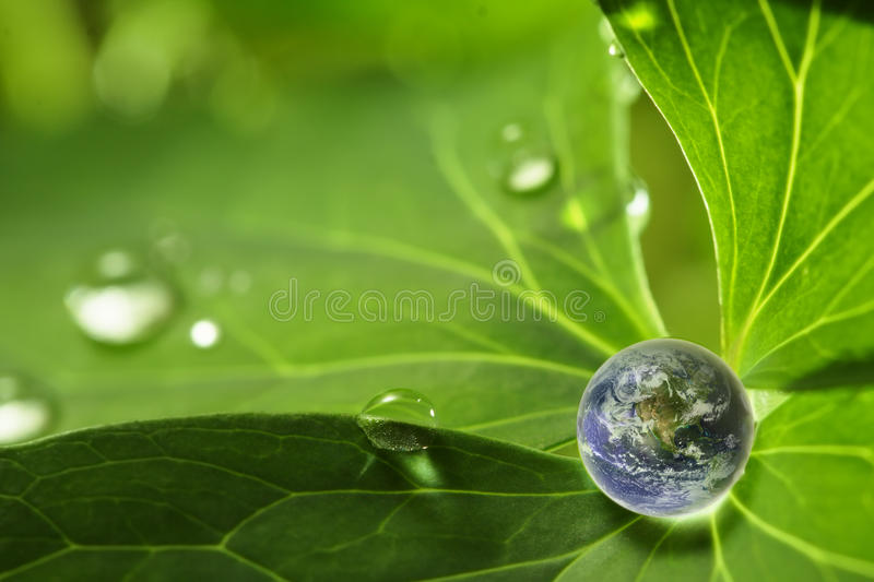 Planet on leaf stock photos