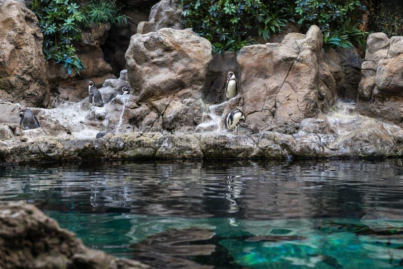 Planet Penguin Aquarium, Loro Parque, Tenerife, Canary Islands. Spain, marine life royalty free stock image