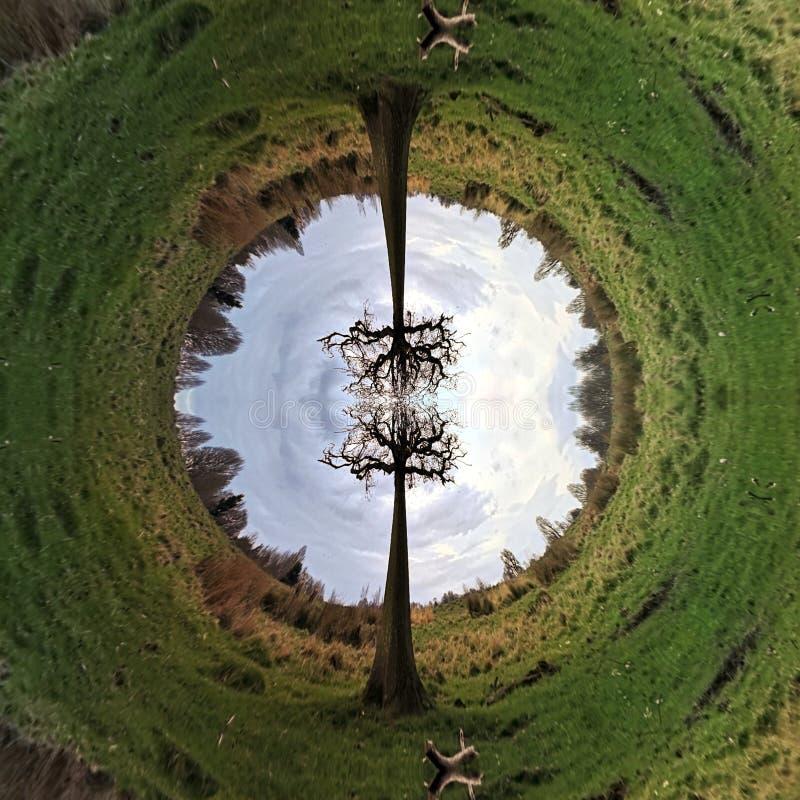 Tree planet stock photo