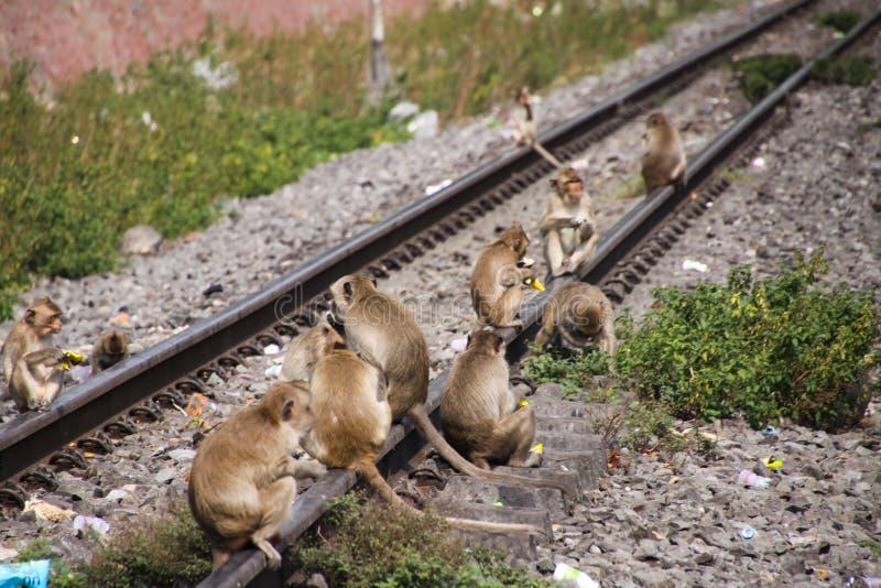Planet von Affen - große Gruppe Affen Macaca fascicularis, die auf einem railingat Bahnhof in Lopburi, Thailand sitzen lizenzfreie stockfotos
