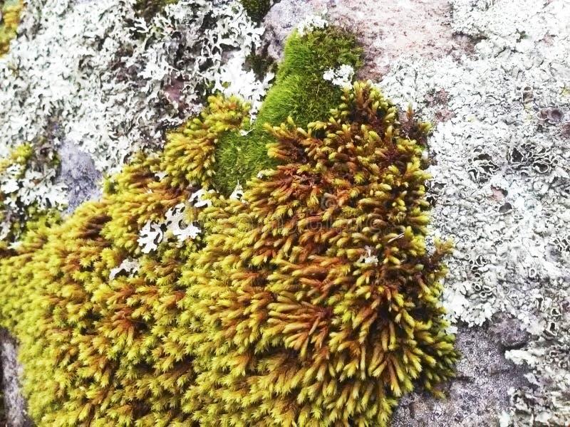 Planeta de la tierra de la planta verde de la naturaleza de la maleza del rastro del moho de la roca fotos de archivo libres de regalías