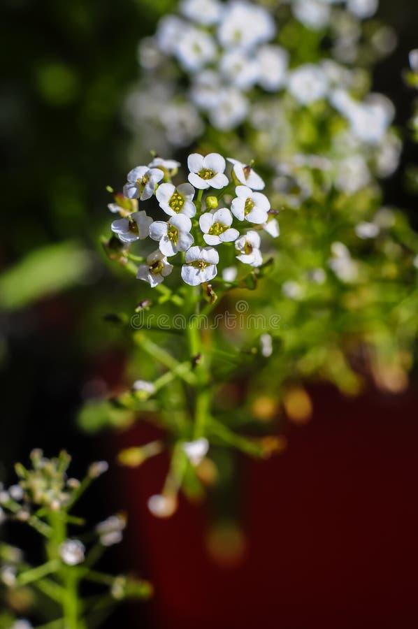 Planeta de las flores fotos de archivo