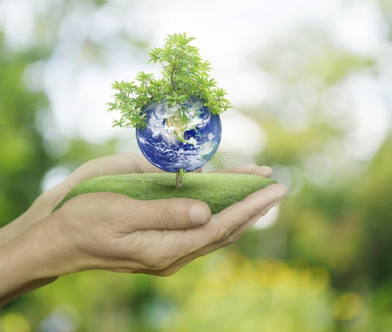 Planeta y árbol en manos humanas en el fondo verde del bokeh, reserva t imagen de archivo libre de regalías