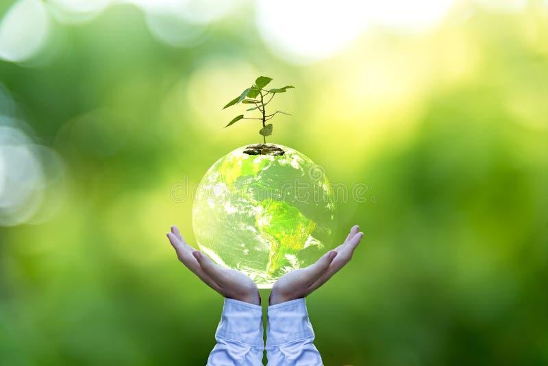 Planeten och trädet i människahänder över den gröna naturen, sparar jordbegreppet, arkivbild