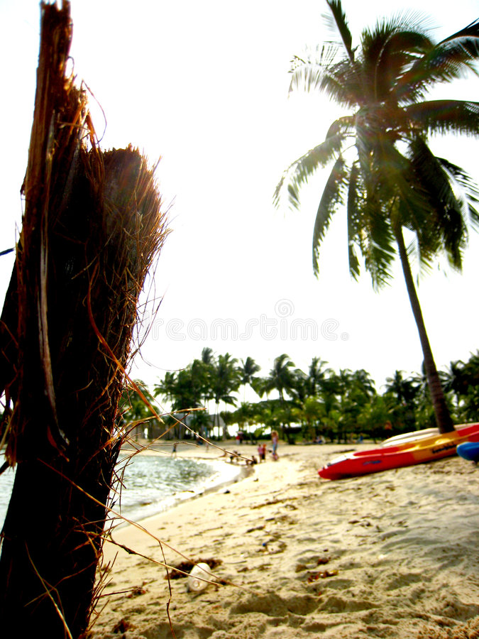Download Plank On the Beach stock image. Image of magnificent, resort - 4424755