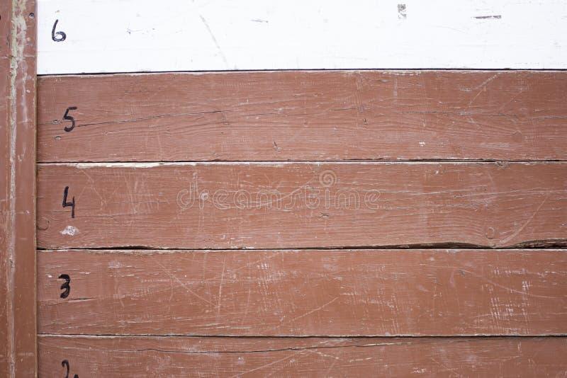 Planke von Stieren lizenzfreie stockbilder