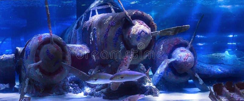 Plano afundado sob a água no aquário de Antalya de Turquia imagens de stock