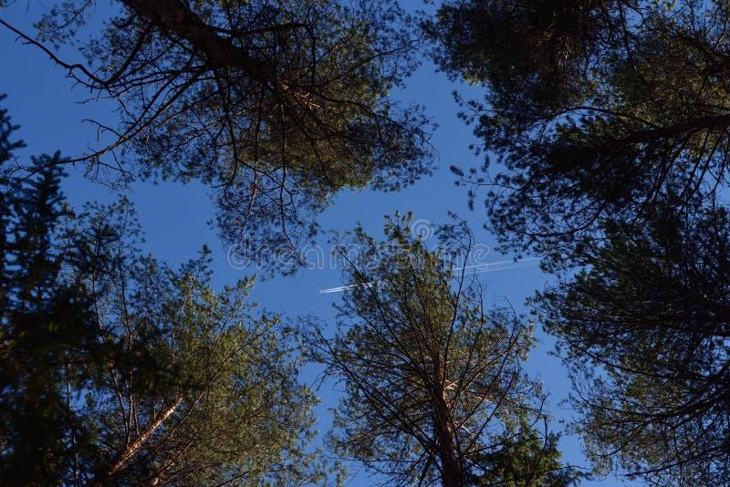 Plano entre árvores altas imagens de stock royalty free