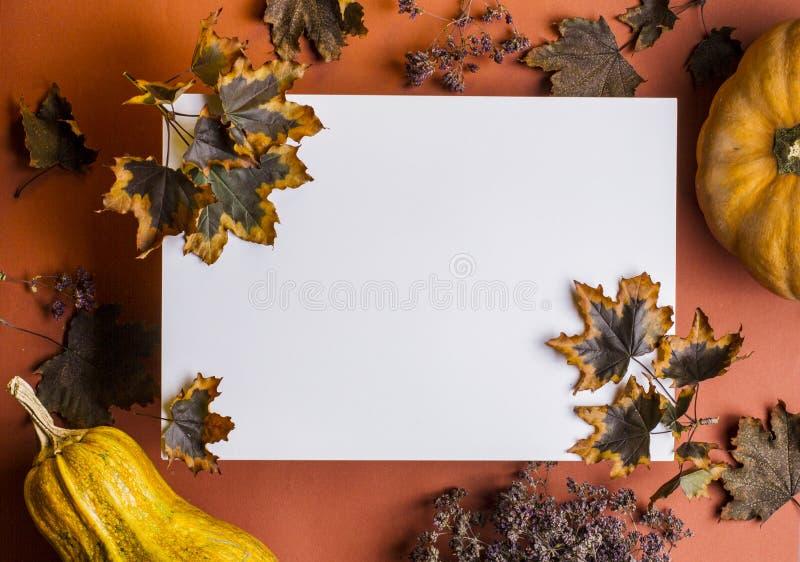 Plano otoño, pumkins y hojas y flores de otoño fotos de archivo libres de regalías