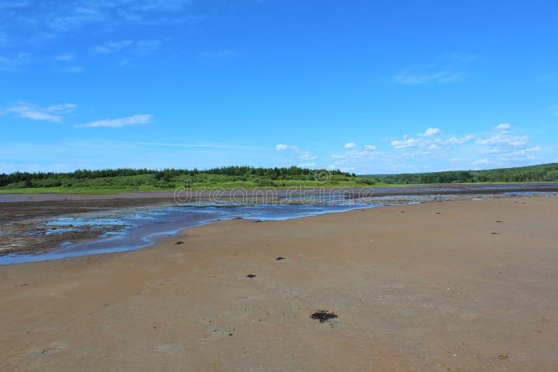 Planos enlameados de sal em um pântano pelo litoral na ilha bretão do cabo no verão imagem de stock royalty free