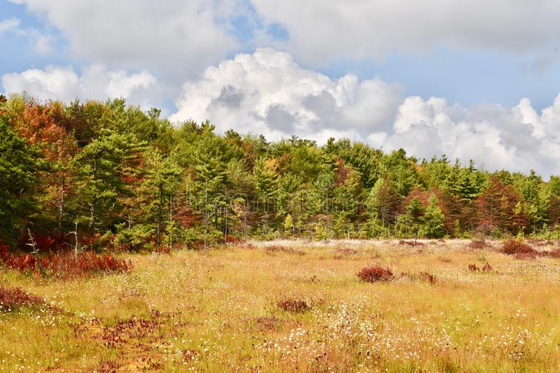 Planos spruce cênicos pântano e área dos animais selvagens imagem de stock royalty free