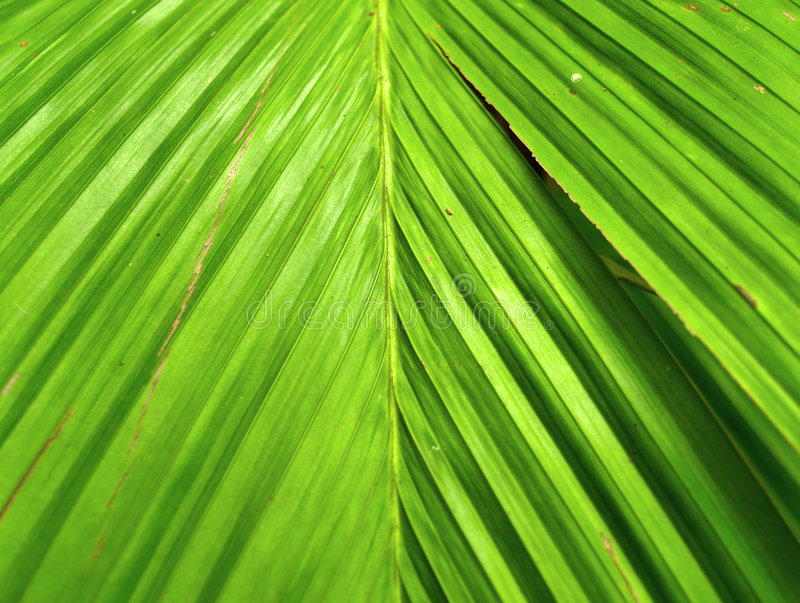 Download Plant 01 Stock Photography - Image: 522232