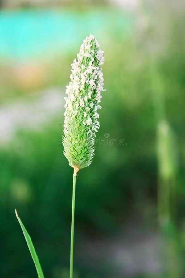 Download Plant stock image. Image of flora, garden, macro, park - 13532403