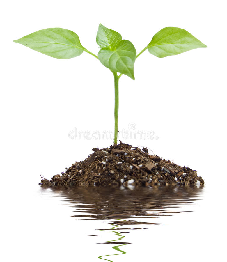 Download Plant stock photo. Image of isolated, fresh, background - 13537036