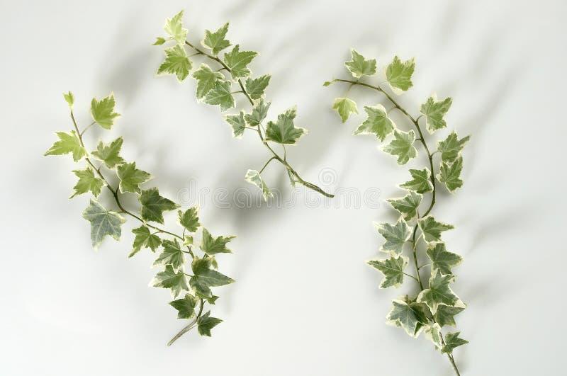 Download Plant stock image. Image of vine, green, land, single - 14854201