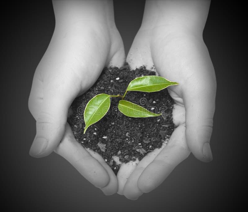 Download Plant stock photo. Image of environmental, flourish, metaphor - 17253488