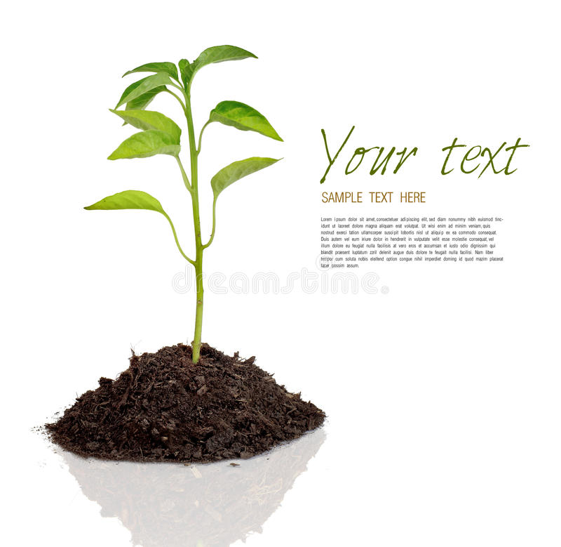 Plant vector illustration