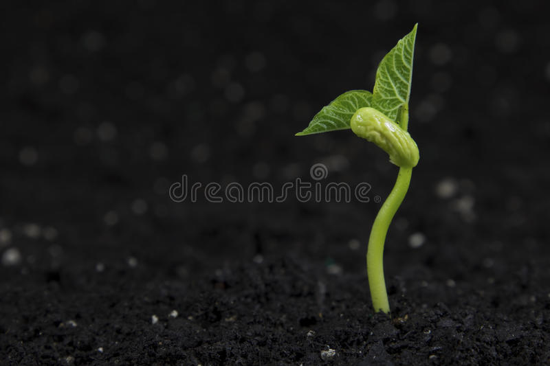 Plant royalty free stock photography