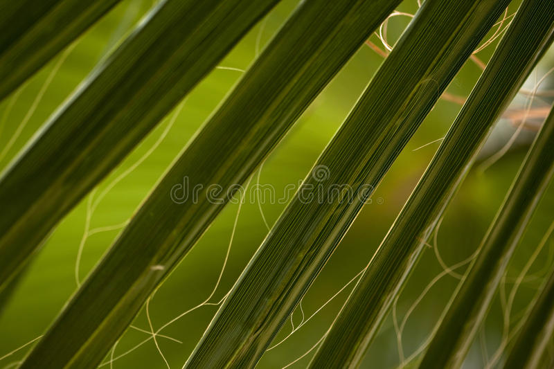 Download Plant Stock Images - Image: 24927184