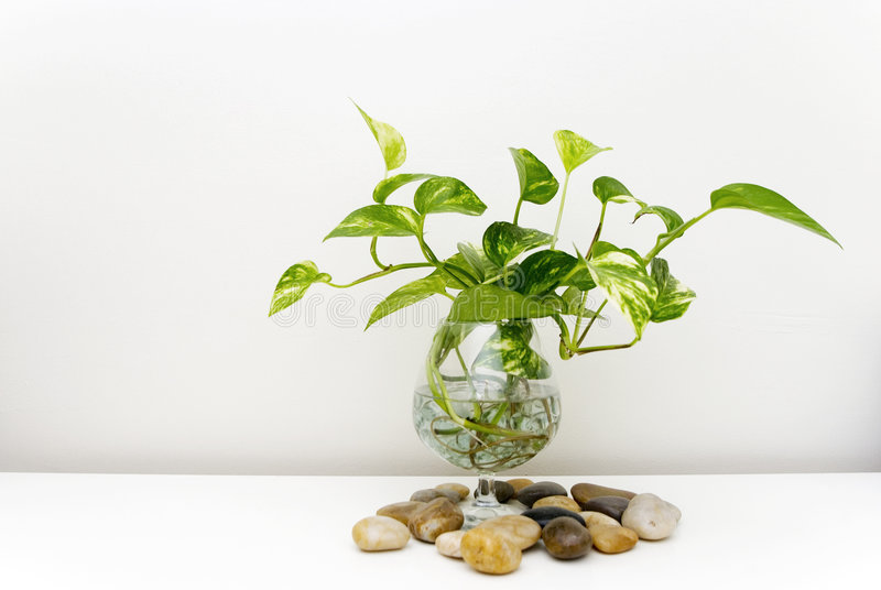 Download Plant stock image. Image of counter, water, stones, glass - 66961