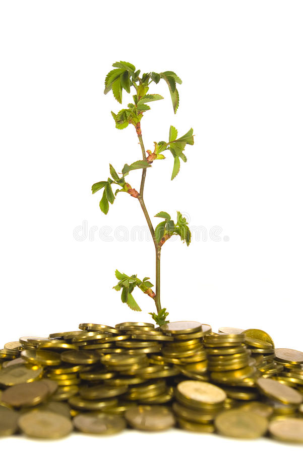 Free Plant And Gold Coins Isolated On White Stock Photos - 13806643
