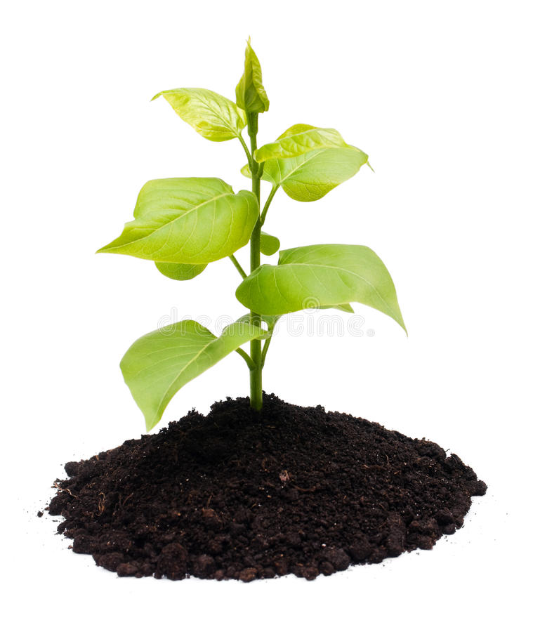 Free Plant And Soil Stock Photo - 13949000