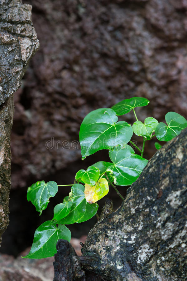 Plant appearing from rock stock photo