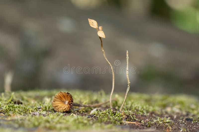 Plant barely alive sitting on moss. Moss with a plant barely alive showing a little flower also dried royalty free stock image