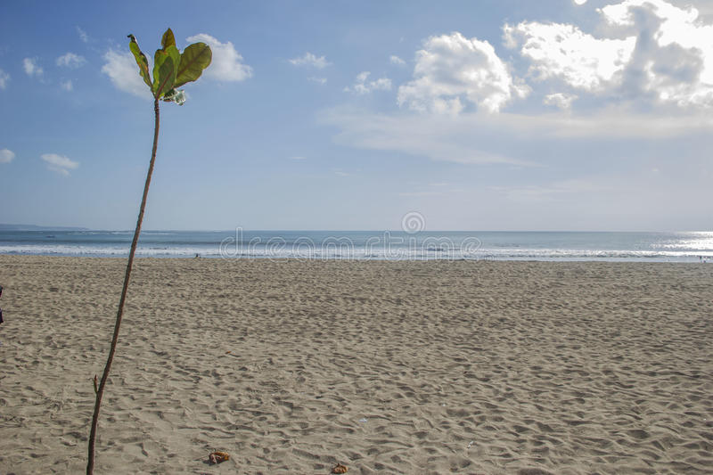 Download Plant With A Beach On The Background Stock Photo - Image: 28271060
