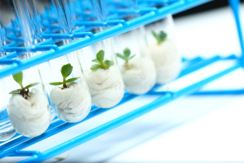 Plant biotechnology Series 8 stock images