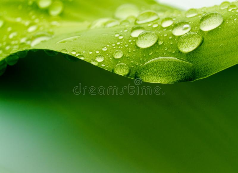 Plant blad royalty-vrije stock foto