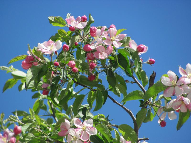 Plant, Blossom, Branch, Flowering Plant Free Public Domain Cc0 Image