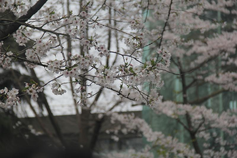 Plant, Blossom, Flower, Branch Free Public Domain Cc0 Image
