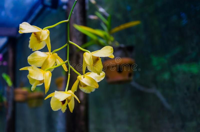 Plant flowering and blossoming during spring morning season. Plant blossoming during morning time in the spring season with trace of water morning stock photography