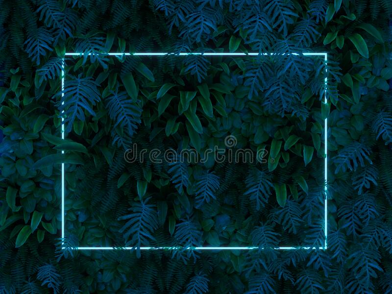Plant with blue neon light frame. Plant with blue rectangular neon light frame royalty free stock images