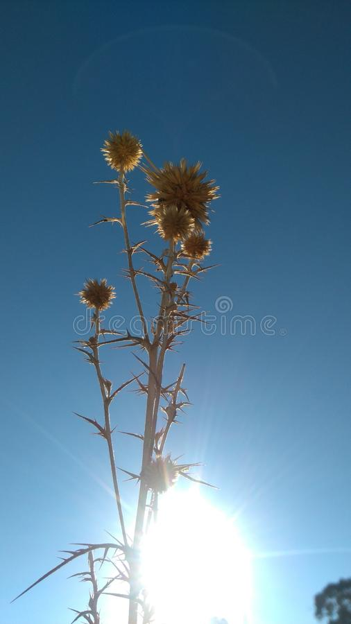 Plant in the blue sky background royalty free stock image