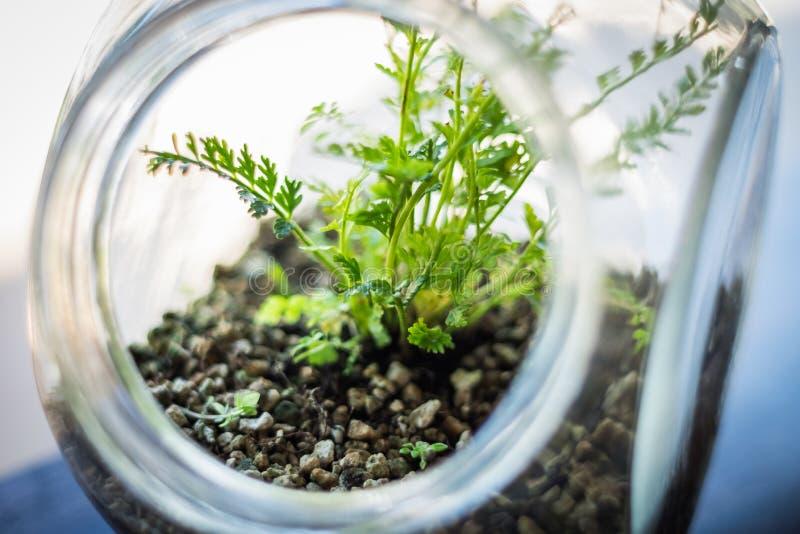 Plant in bottle , terrarium. Plant in bottle in the shop, terrarium stock images