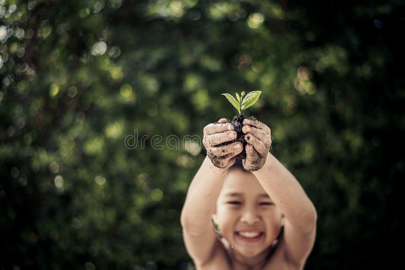 Plant in boy hand stock image