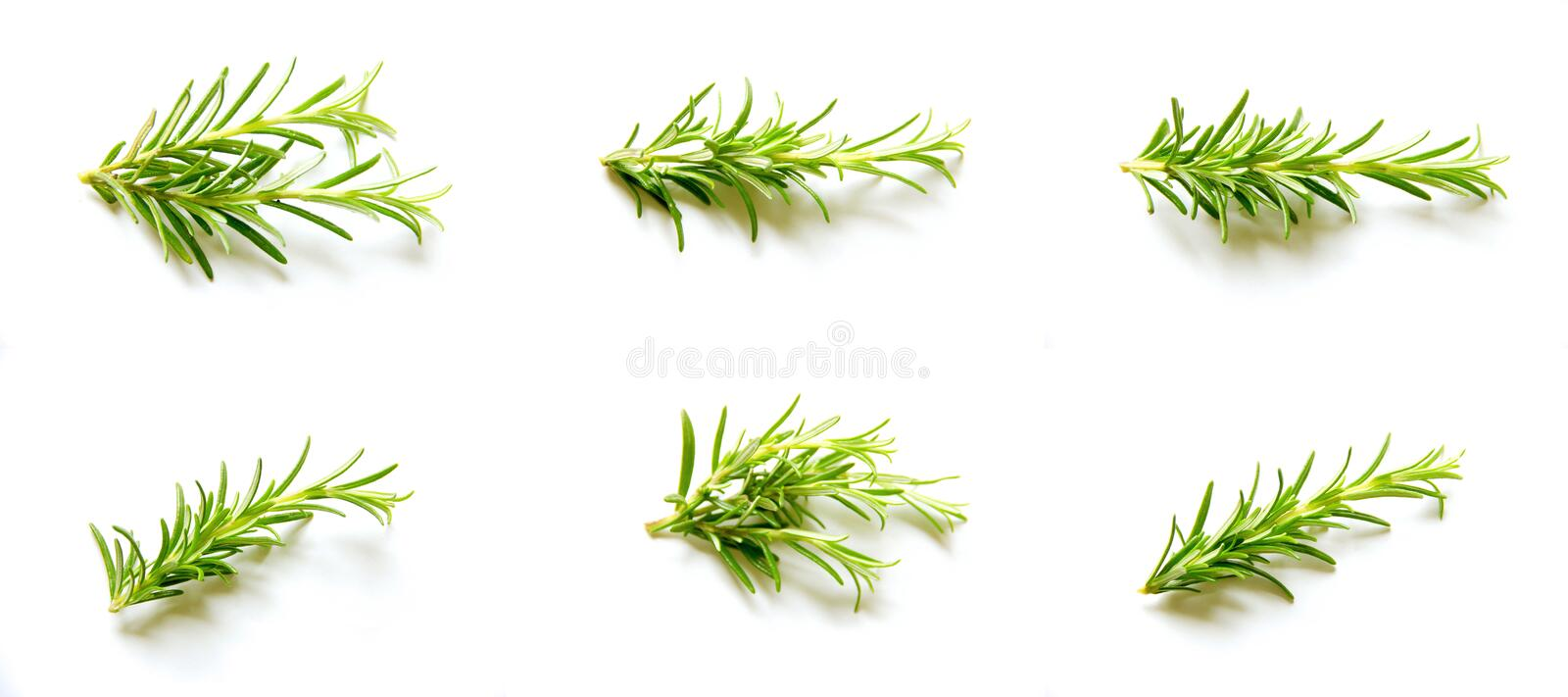 Plant, Branch, Pine Family, Grass royalty free stock photo
