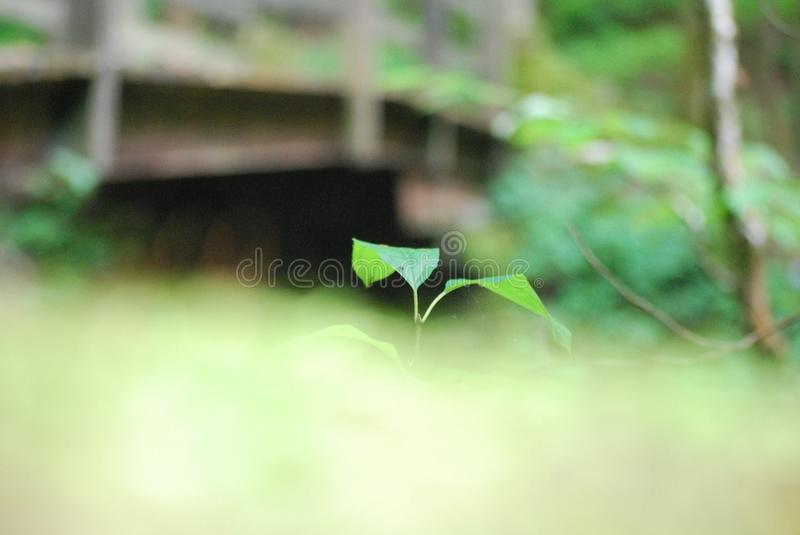 Plant and bridge royalty free stock photo