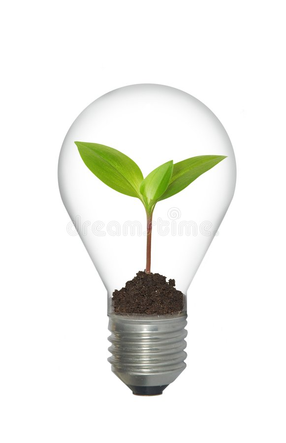 Download Plant in bulb stock image. Image of green, glass, earth - 8963265