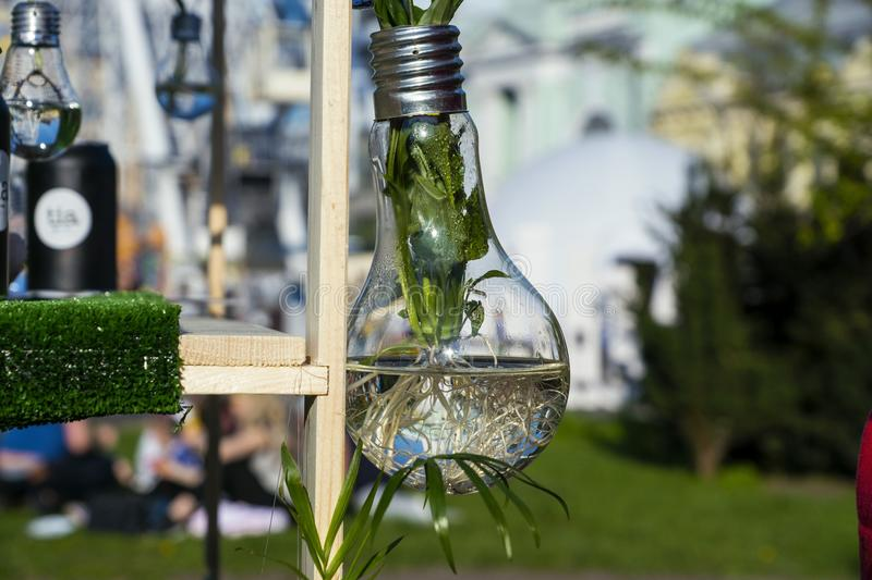 Plant in a bulb. Green plant in a bulb royalty free stock photo