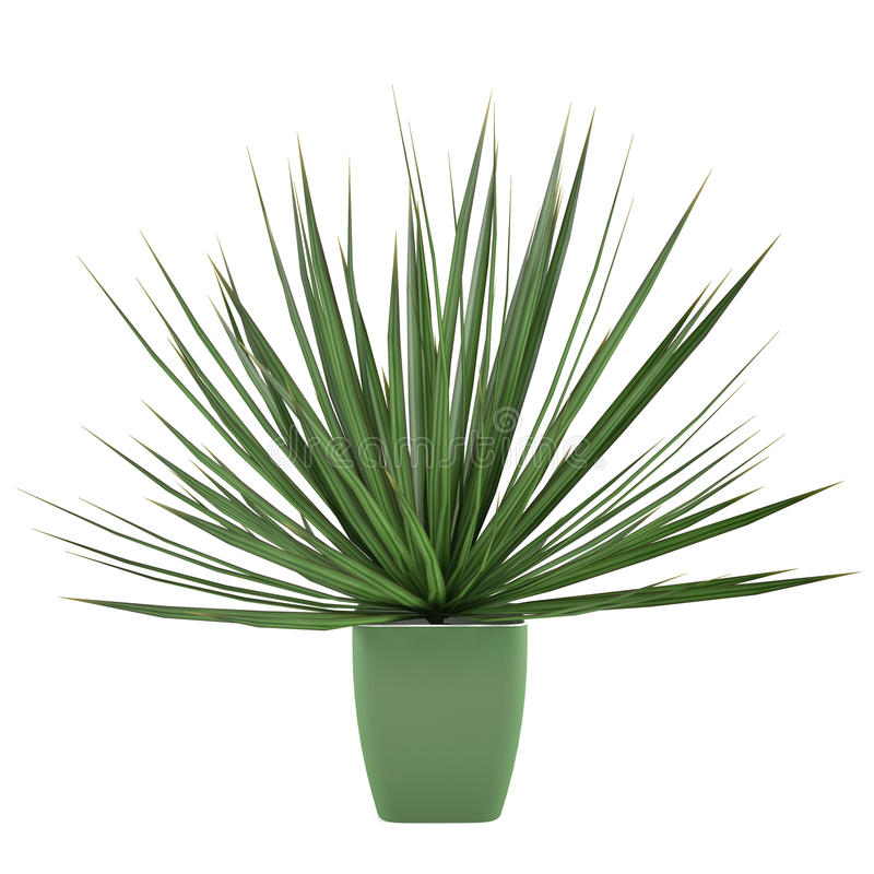 Plant bush isolated in the pot