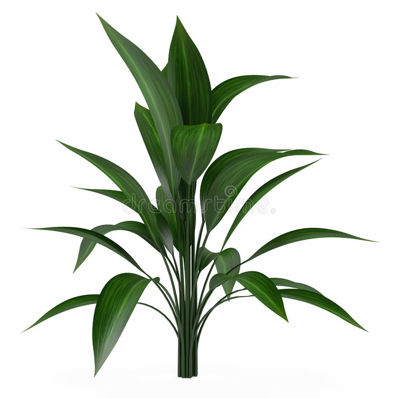 Download Plant bush isolated stock illustration. Image of tropical - 36408719