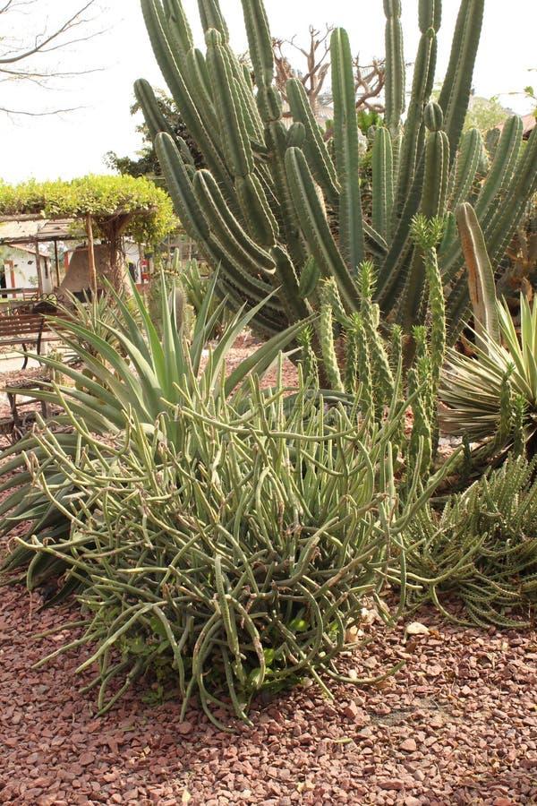 Plant cactus stock photos