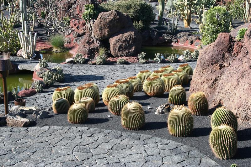 Plant, Cactus, Garden, Flowering Plant royalty free stock images